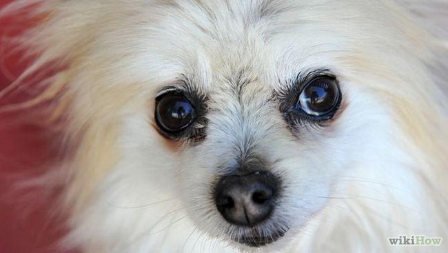 Зображення з назвою Photograph Pets Step 9