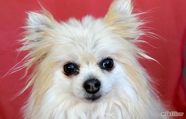 Зображення з назвою Photograph Pets Step 2