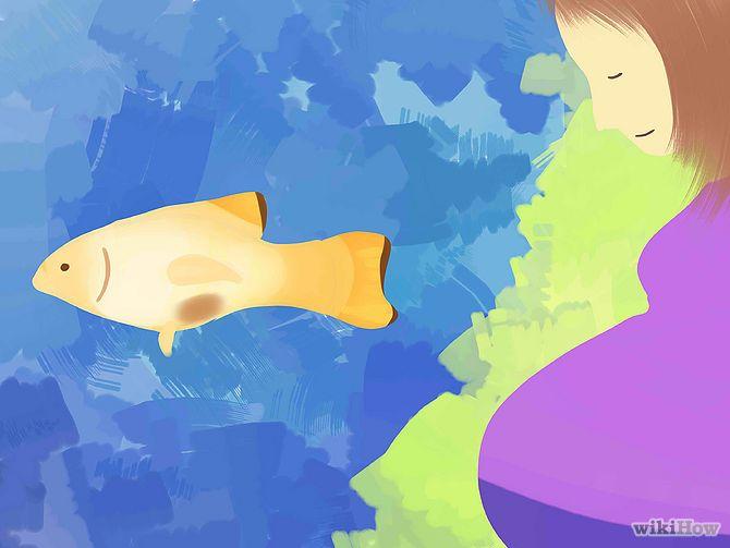 Зображення з назвою Find Out if Your Guppy Is Pregnant Step 4