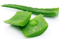 Сік з листя алое при лікуванні закрепів у дітей