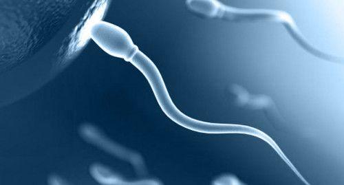 Правильно здати спермограмму